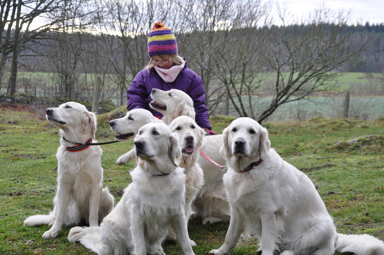saga med hundarna